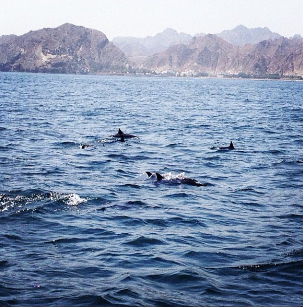 Dolphin watching - Muttrah Qorniche